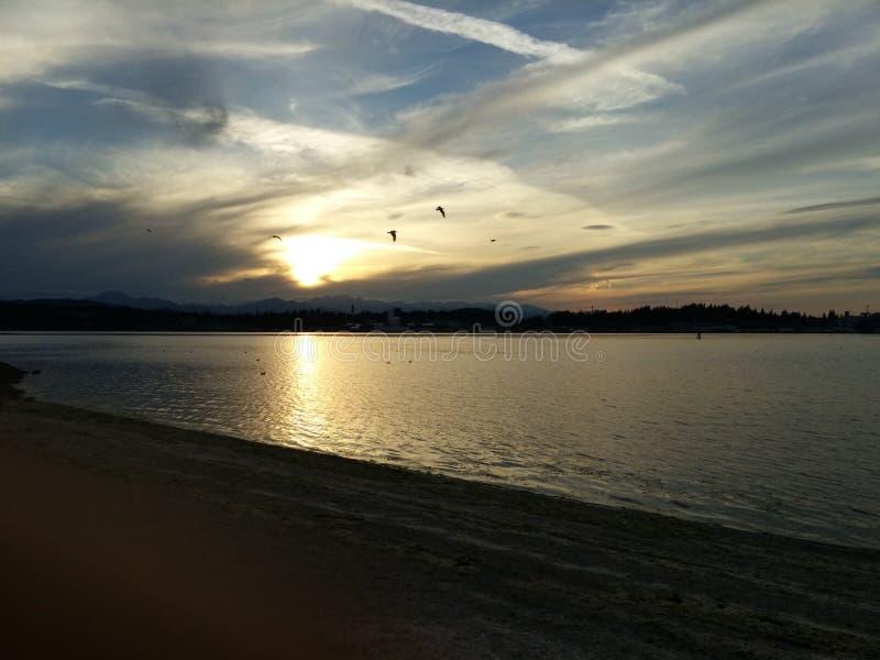 Segull solnedgång fotografering för bildbyråer