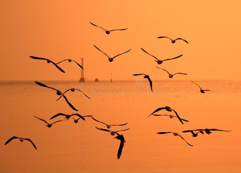 Segulls flying in the golden sky stock photography