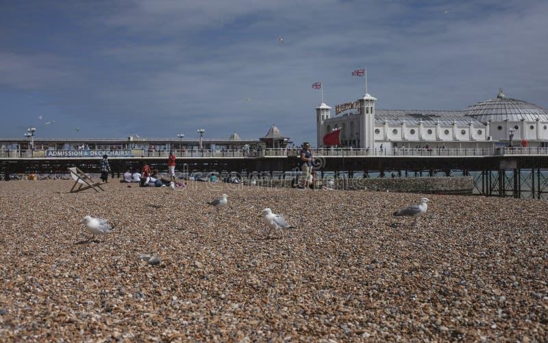 Segulls op het strand in Brighton royalty-vrije stock afbeelding