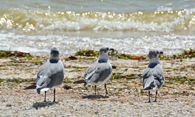 Segulls on the Shore stock image