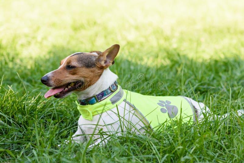 Segurança vestindo do cão que reflete a veste leve imagens de stock royalty free