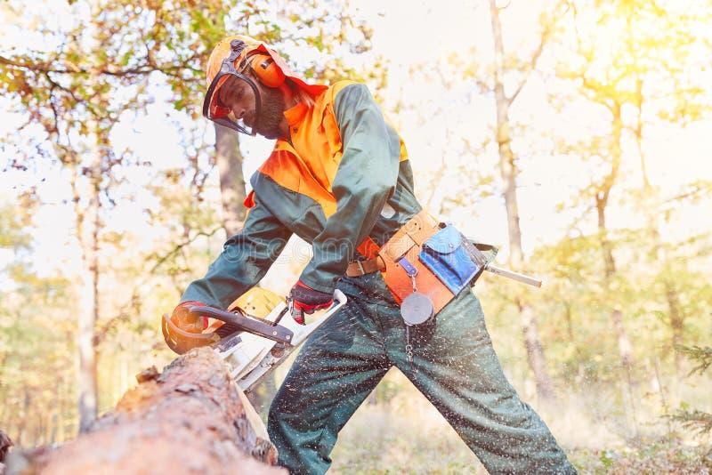 Seguridad profesional en el leñador con la motosierra imagen de archivo libre de regalías