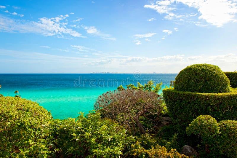 Sehen Sie Abflussrinne die Büsche in Isla Mujeres, Mexiko an stockbilder