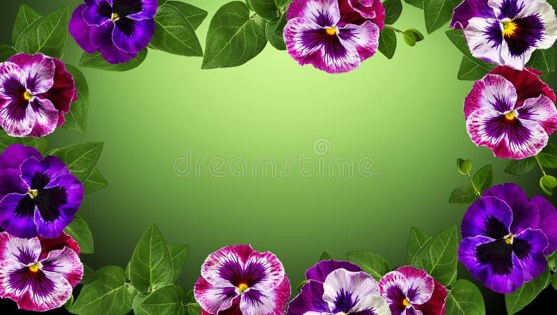 Sehen Sie meine anderen Arbeiten im Portefeuille Feld machte Blumen, den Hintergrund gr?nen Bl?tter Valentinsgru?es mit Blumen lizenzfreies stockfoto