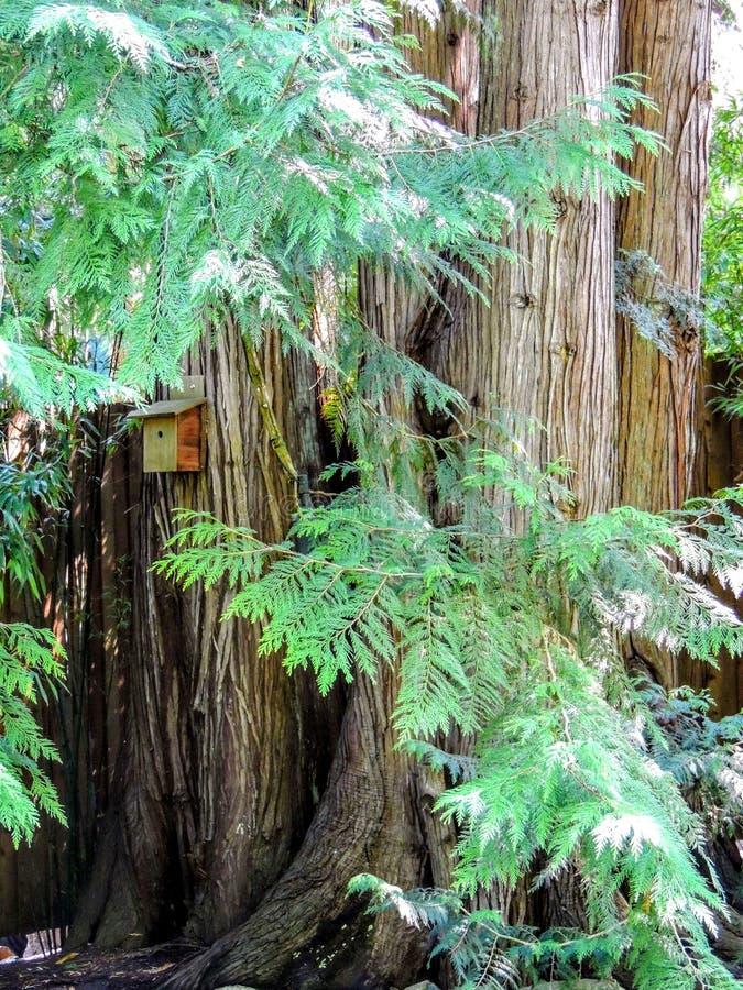 Sehr große Baum-Stämme mit einem angebrachten kleinen Vogel-Haus stockbilder