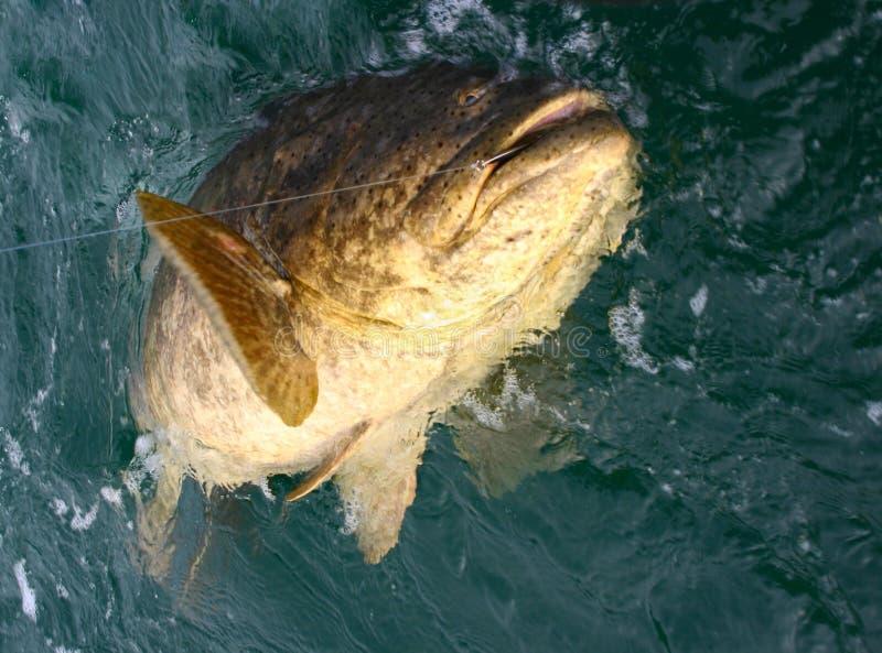 Sehr große Fische stockbild