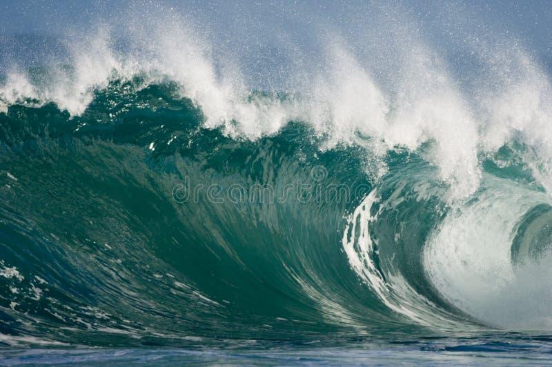 Sehr große hawaiische Welle stockbilder