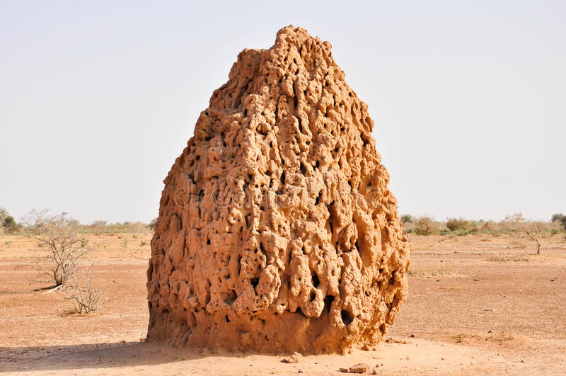 Sehr große Termite-Kathedrale in der Wüste stockfoto