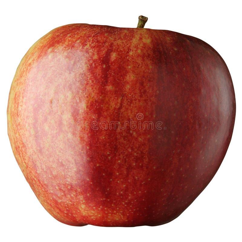 Sehr großer roter, schöner, saftiger, geschmackvoller Apfel stockfoto