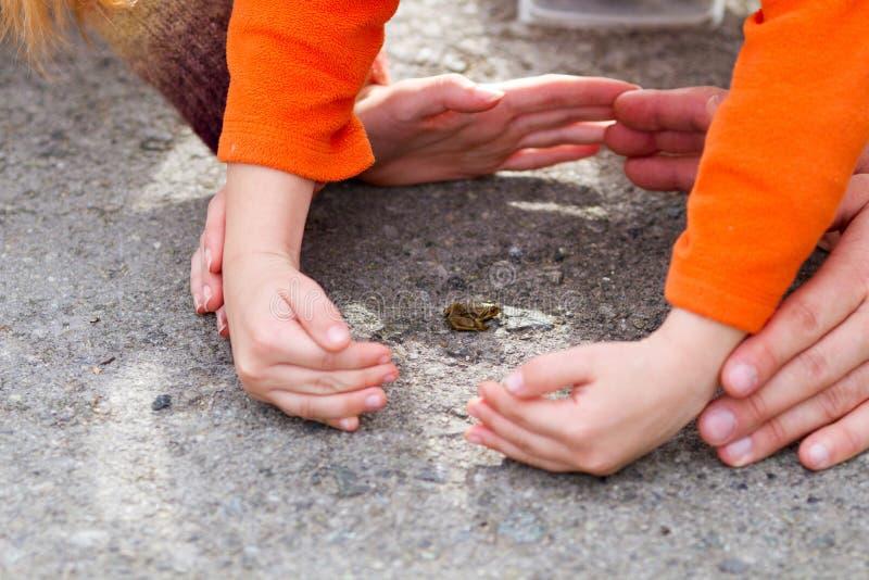 Sehr kleiner Frosch, umgeben von den Händen von Kindern und Erwachsenen lizenzfreie stockbilder