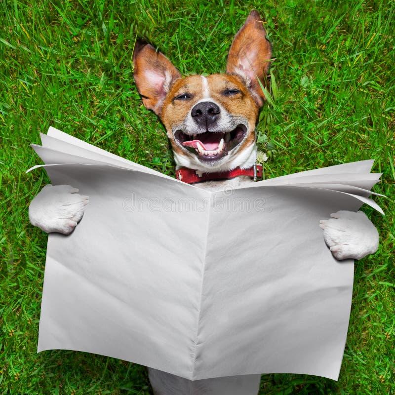Sehr lustiger Hund stockfoto