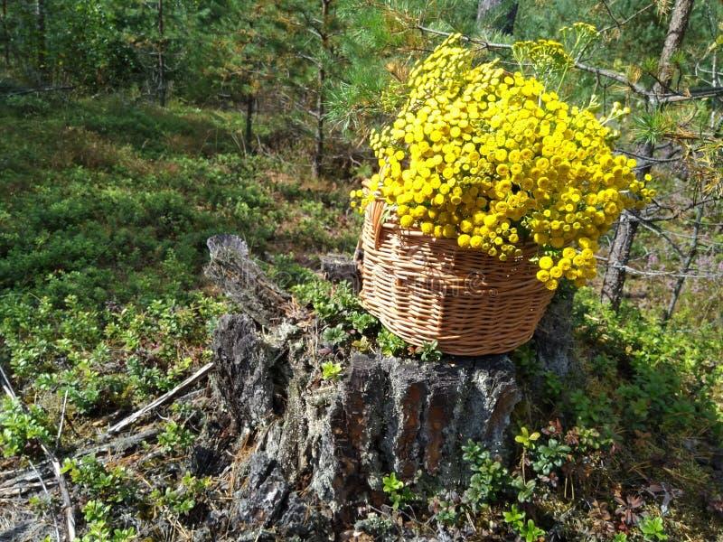 Sehr netter hölzerner Korb gefüllt mit gelben Blumen stockfoto