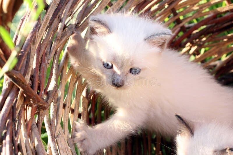 Sehr nettes Kätzchen lizenzfreies stockfoto