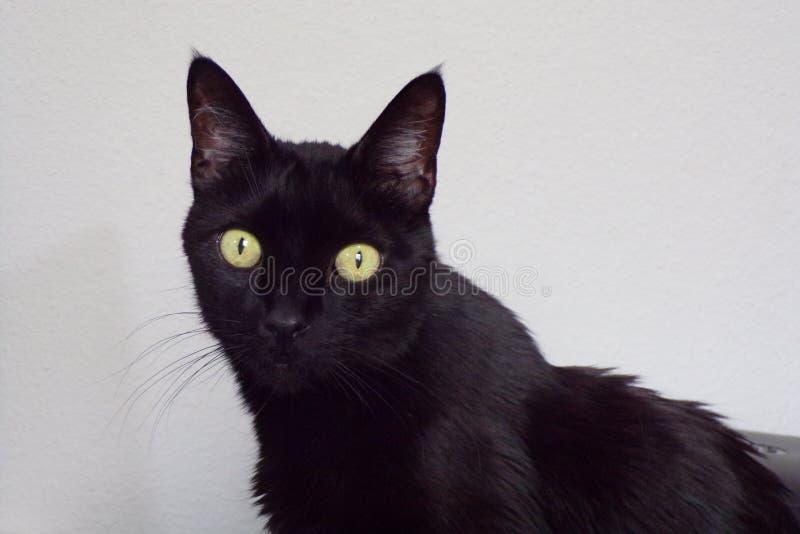 Sehr recht schwarze Miezekatze mit enormen Augen stockfotografie