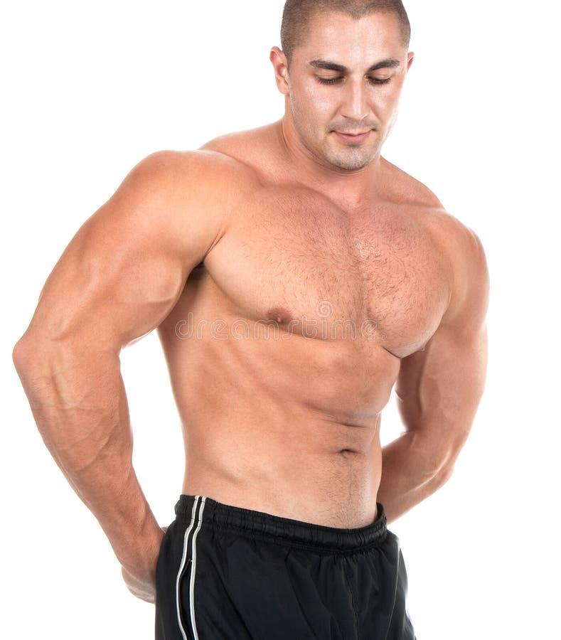 Sehr reizvoller muskulöser Torso getrennt auf Weiß stockbilder