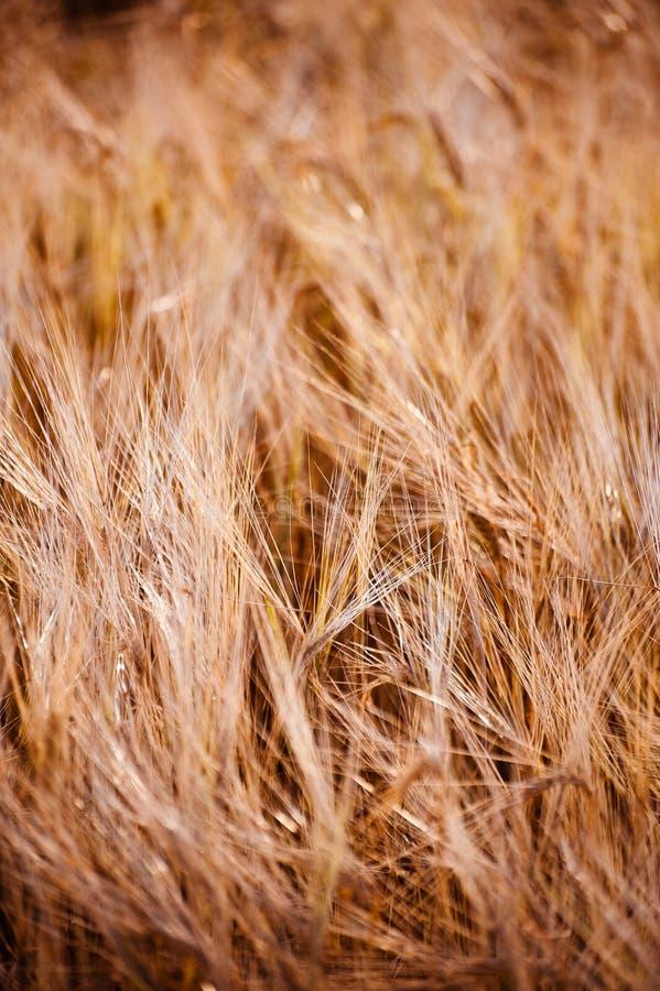 Sehr weiches Gras lizenzfreie stockbilder