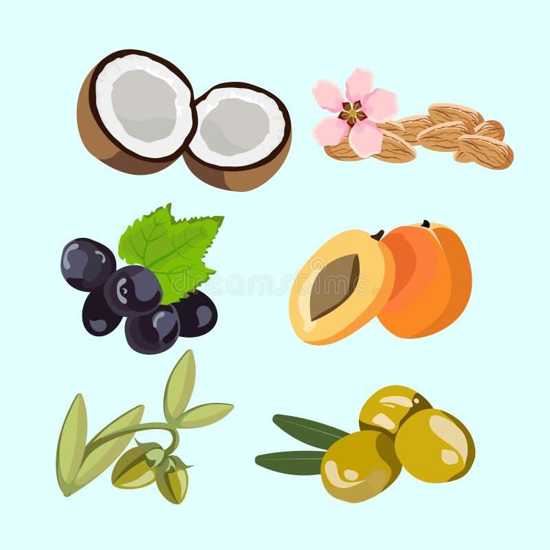 Sei ingredienti per gli oli naturali illustrazione vettoriale