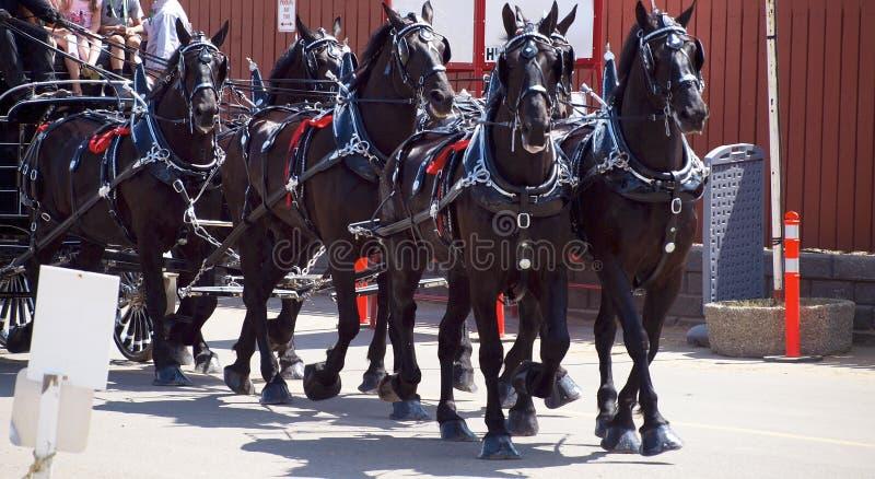Sei legamenti di cavallo immagini stock libere da diritti