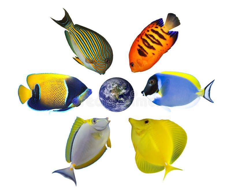 Sei pesci intorno al globo immagine stock libera da diritti