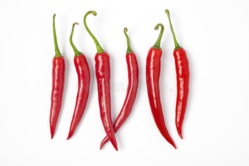 Sei Red Hot Chili Peppers in una riga su Backg bianco fotografia stock libera da diritti