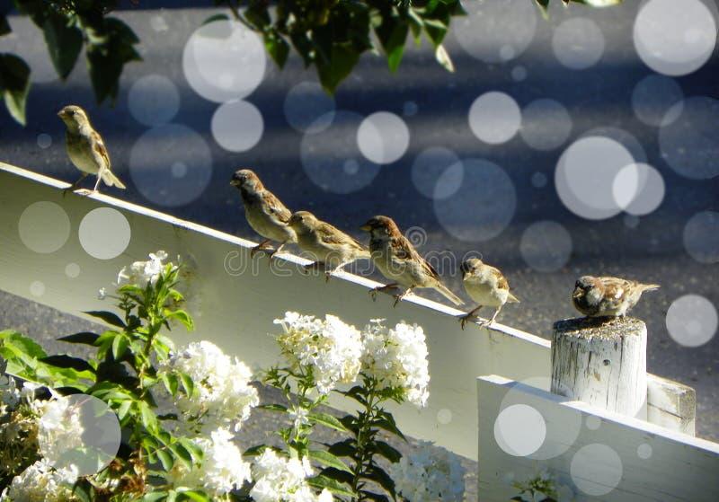 Download Sei uccellini Bokeh immagine stock. Immagine di incorniciato - 55352719