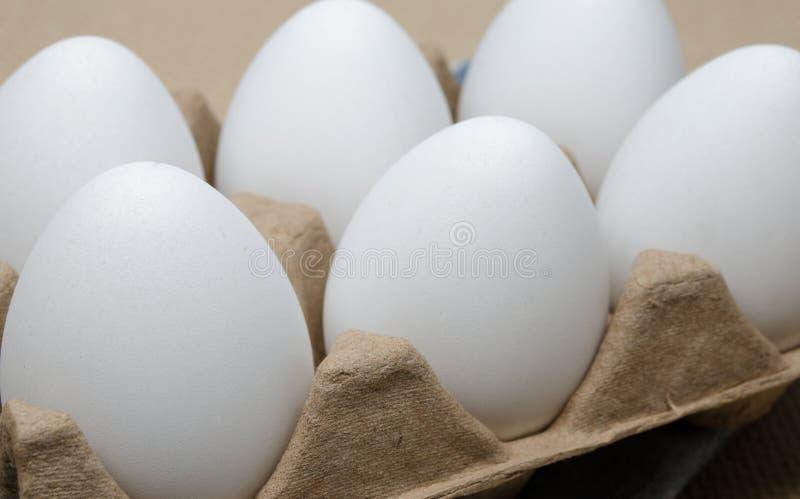 Sei uova del pollo immagine stock