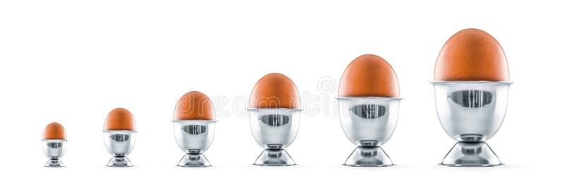 Sei uova in portauova isolati su fondo bianco immagine stock libera da diritti