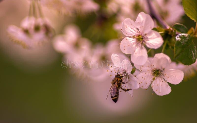 Seien Sie eine beschäftigte Biene lizenzfreie stockfotos