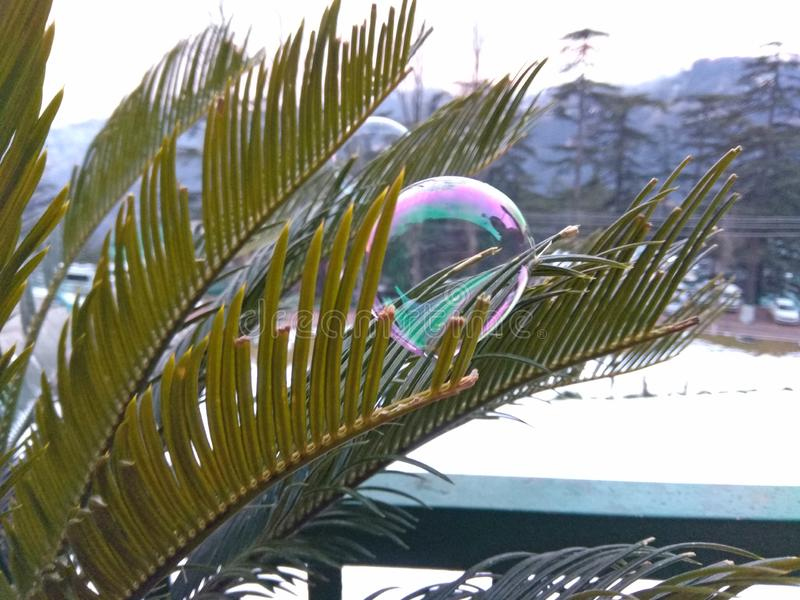 Seifenblasen sind über der Anlage lizenzfreies stockbild