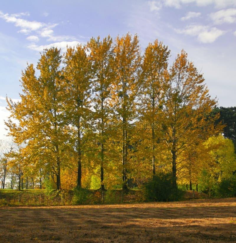 Seis árvores foto de stock royalty free