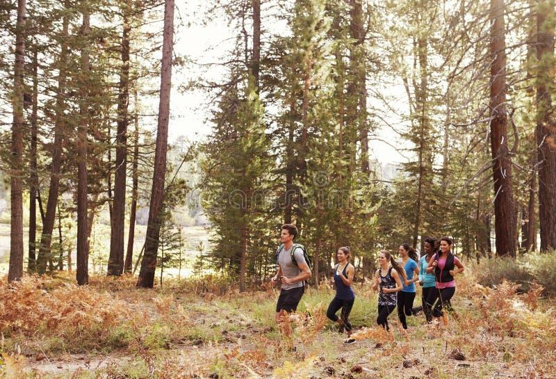 Seis adultos novos que correm em seguido através de uma floresta foto de stock