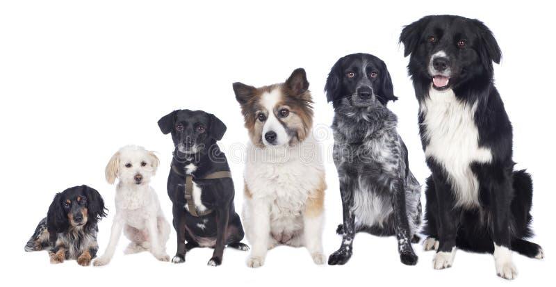 Seis cães misturados da raça em seguido imagens de stock