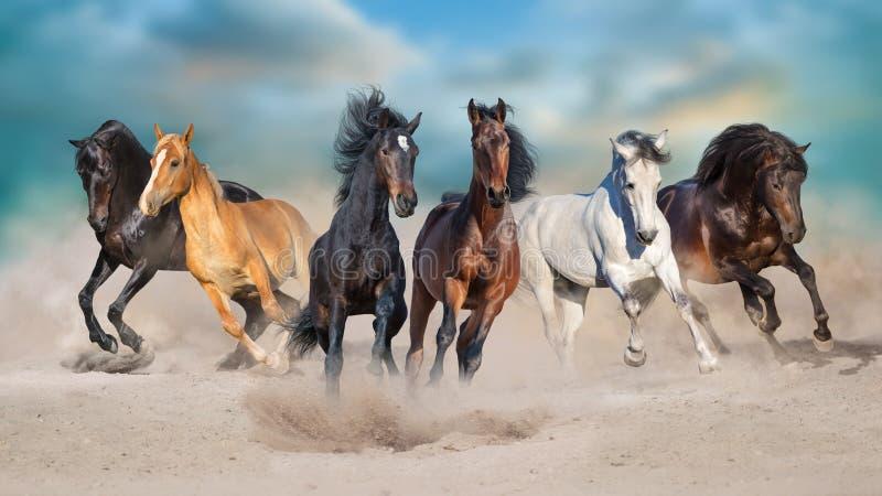 Seis caballos funcionados con en desierto arenoso imagenes de archivo