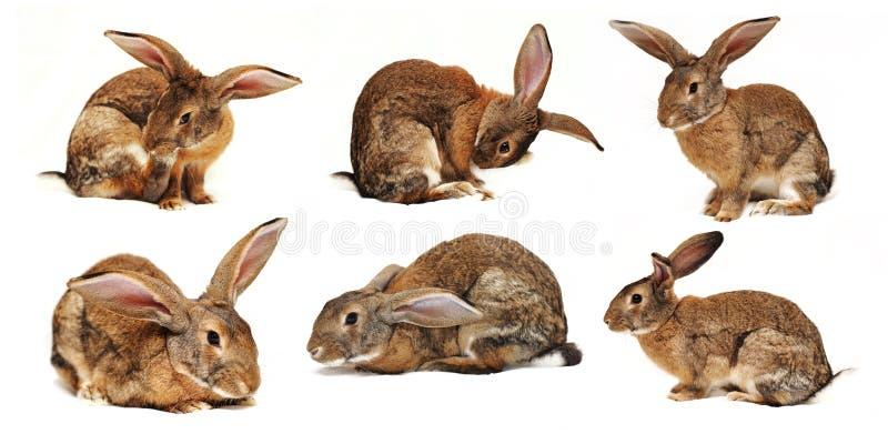 Seis conejos en un fondo blanco imágenes de archivo libres de regalías