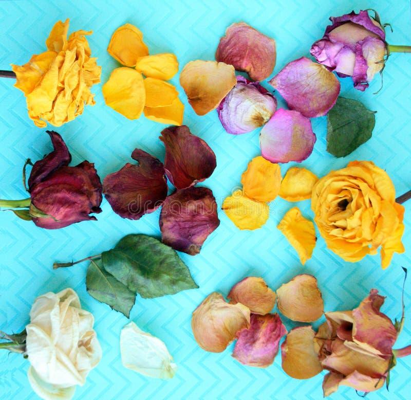 Seis flores color de rosa secadas coloridas fotos de archivo