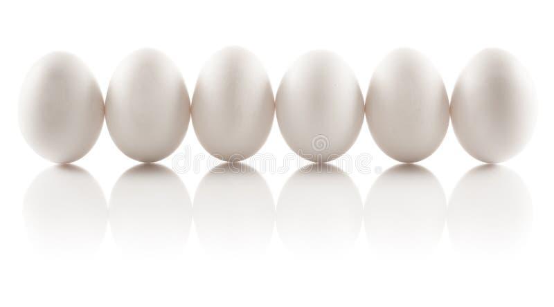 Seis huevos aislados del pollo foto de archivo libre de regalías