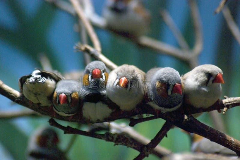 Seis pájaros que se sientan en un cierre del árbol junto imagen de archivo