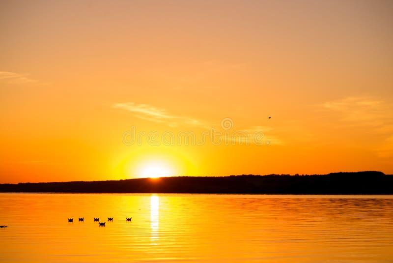 Seis papiroflexia bajo la forma de barcos navega por el lago en la puesta del sol por la tarde Los barcos de papel están derivand imagenes de archivo