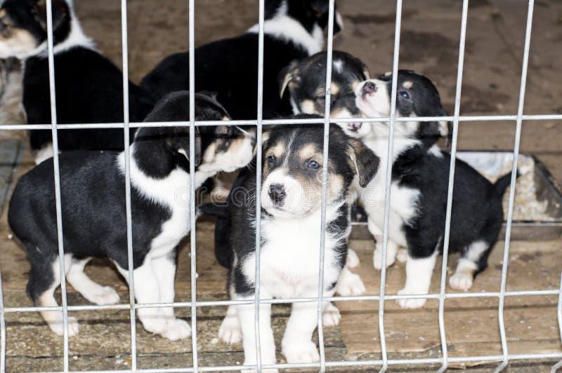 Seis perritos en la casa del refugio fotografía de archivo libre de regalías