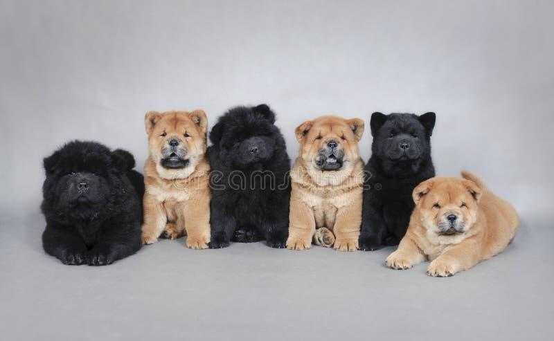Seis retratos pequenos dos cachorrinhos da comida de comida fotografia de stock