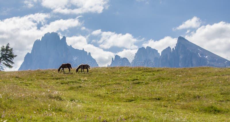 Seiser Alm Alpe di Siusi with Langkofel mountain Sassolungo & Sassopiatto mountain ranges high mountain plateau. Picturesque summer alpine landscape  seen from stock photography