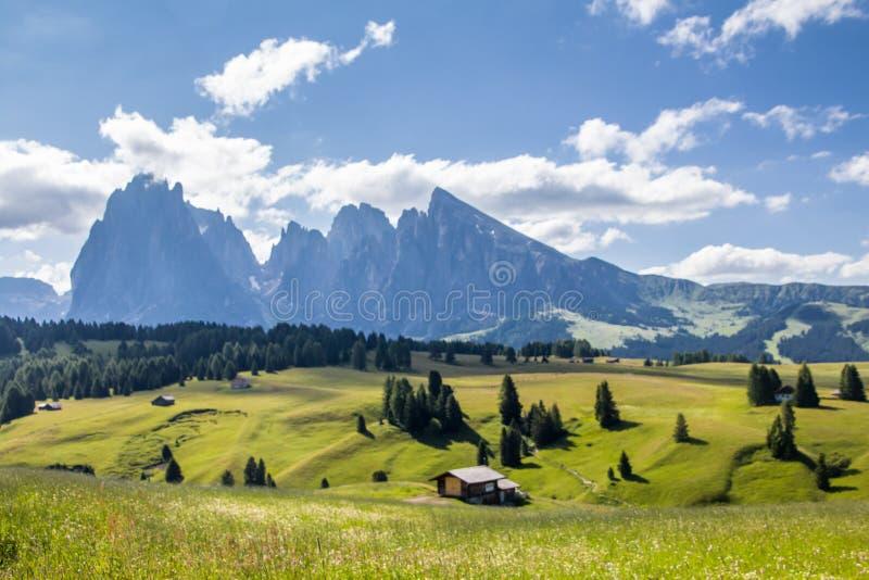 Seiser Alm Alpe Di Siusi met Langkofel-berg Sassolungo & Sassopiatto-plateau van de bergketens het hoge berg stock fotografie