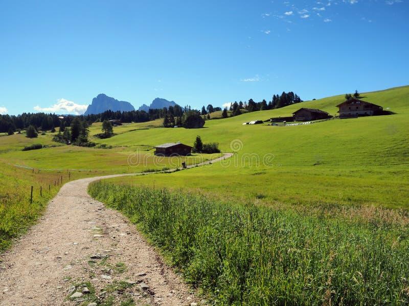 Seiser datki - Trentino Altowy Adige Włochy fotografia stock