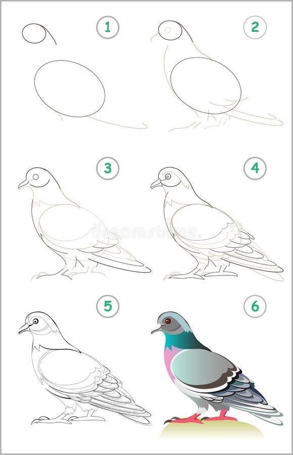 Seite zeigt, wie man Schritt für Schritt lernt, eine nette Taube zu zeichnen Sich entwickelnde Kinderfähigkeiten für das Zeichnen lizenzfreie abbildung
