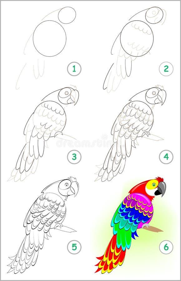 Seite zeigt, wie man Schritt für Schritt lernt, einen netten Papageien zu zeichnen Sich entwickelnde Kinderfähigkeiten für das Ze stock abbildung