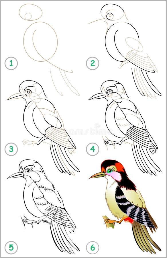 Seite zeigt, wie man Schritt für Schritt lernt, einen Specht zu zeichnen stock abbildung