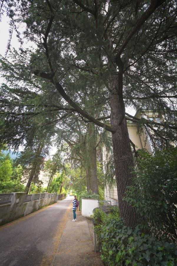 Seitenansicht der Asphaltstraße, Straße im Vorstadtwohngebiet mit Los grünen Bäumen in Europa ist ein ausgezeichnetes grünes und  stockbilder