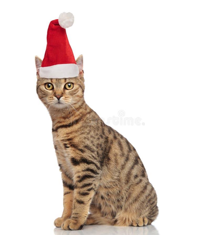 Seitenansicht der entzückenden Sitzkatze der getigerten Katze mit Sankt-Kappe lizenzfreie stockfotografie