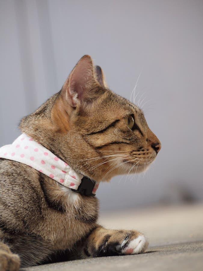 Seitenansicht der Katze der getigerten Katze stockfotografie