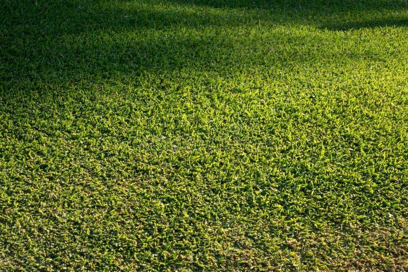 Seitenansicht des eben gemähten Grasrasens stockfoto